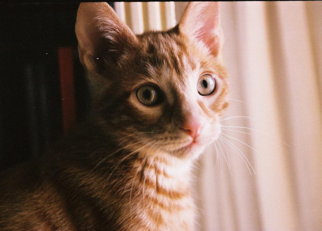 León el gato, fotografía de mascotas por Ibai Fernández